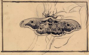 10. Giant Peacock Moth. 1889. Chalk and ink on paper. Van Gogh Museum, Amsterdam.